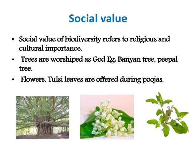 value of biodiversity Tropical forest resources and biodiversity the risks of forest loss and degradation ba wilcox bruce a wilcox is with the institute for sustainable.