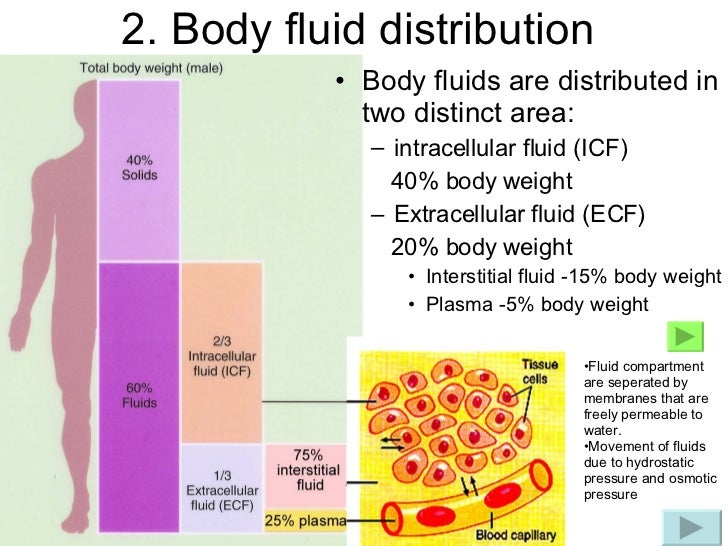 distribution and constiuents of fluids essay Pressure control: inside the borehole, there are high force per unit areas of fluids beneath the surface which push upwards and can do runawaies.