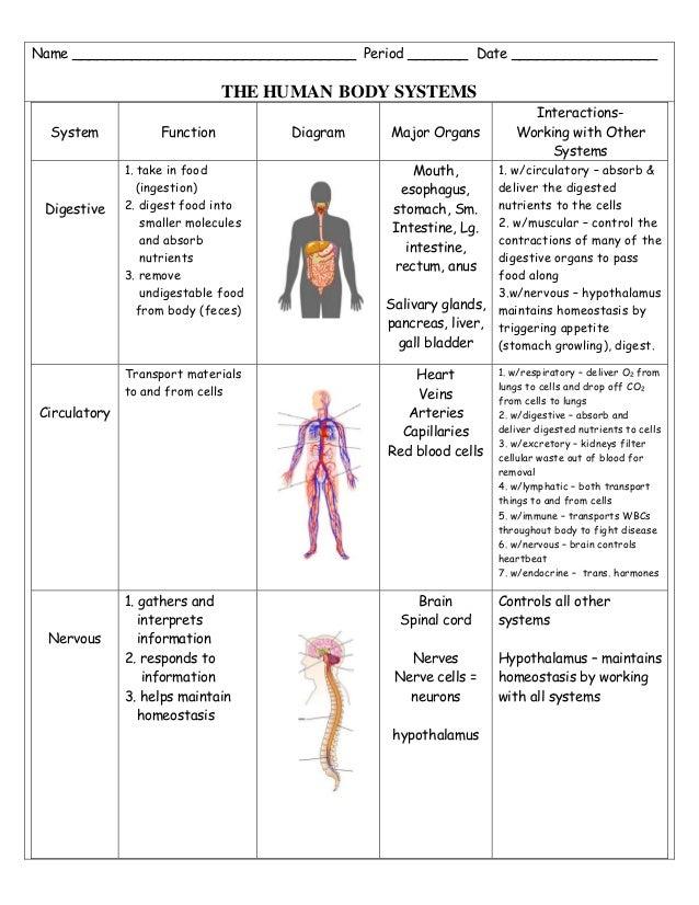 Body System Study Sheet