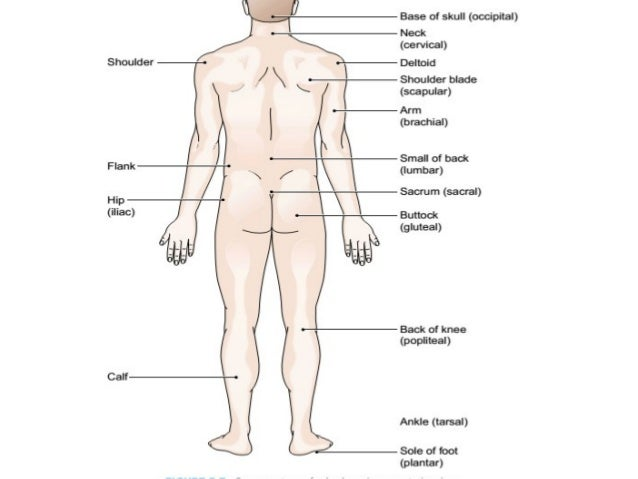Body Directions Regions Planes