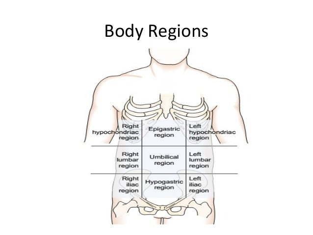 Body Directions1 on cavities within the thoracic cavity