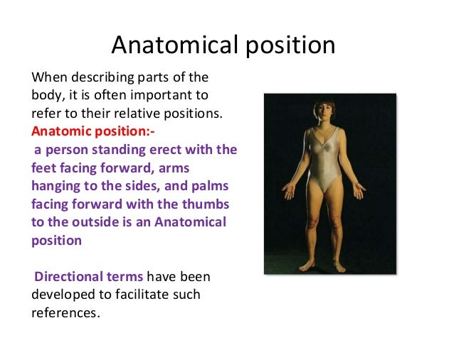Body directions- regions -planes