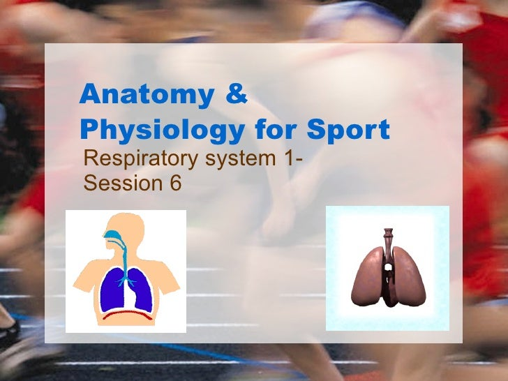Anatomy & Physiology for Sport Respiratory system 1- Session 6
