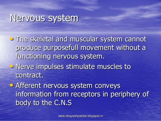 Nervous system• The skeletal and muscular system cannotproduce purposefull movement without afunctioning nervous system.• ...