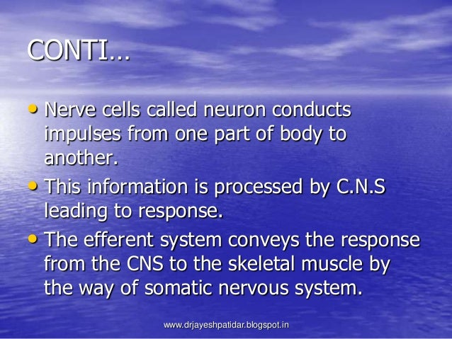 CONTI…• Nerve cells called neuron conductsimpulses from one part of body toanother.• This information is processed by C.N....