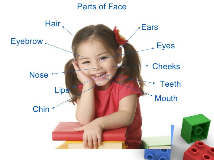 Names And Pictures Of External Parts Of The Body For Preschoolers And