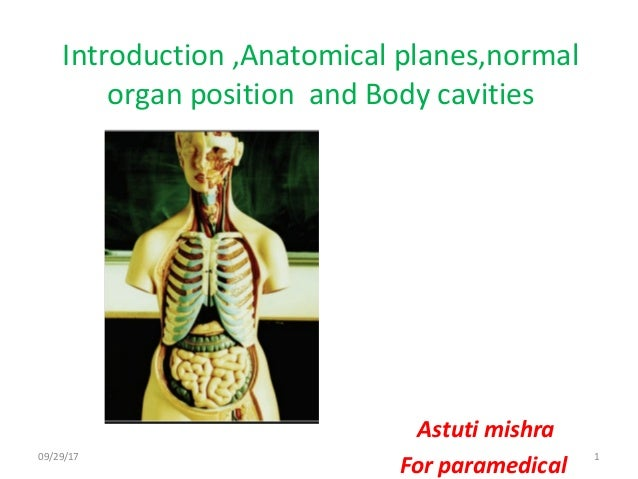 Body Planes And Body Cavities Anatomy