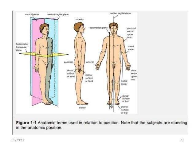 Body planes and body cavities (anatomy)
