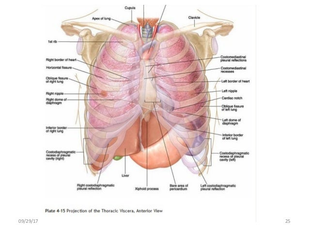 Body planes and body cavities anatomy 092917 25 ccuart Images