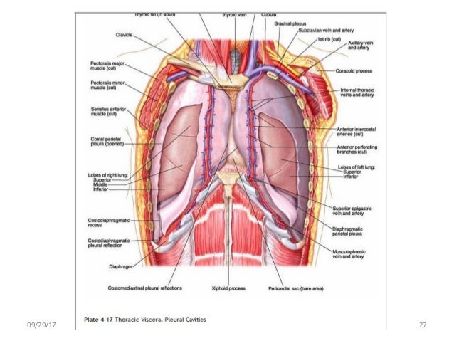 Body planes and body cavities anatomy 092917 27 ccuart Images