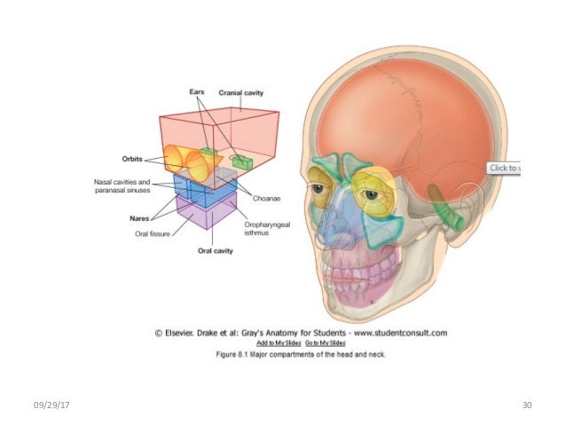 Body Planes And Body Cavities Anatomy