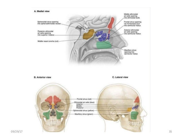 Body planes and body cavities anatomy 092917 35 ccuart Images