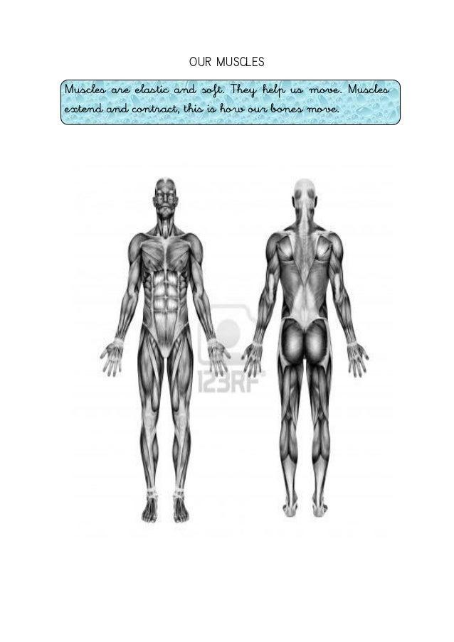Human body (bones, muscles, joints, internal organs)
