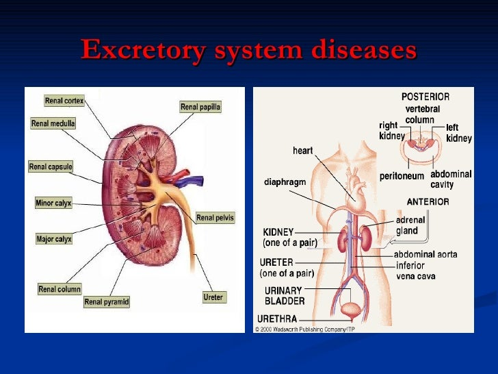 body systems diseases – citybeauty, Muscles