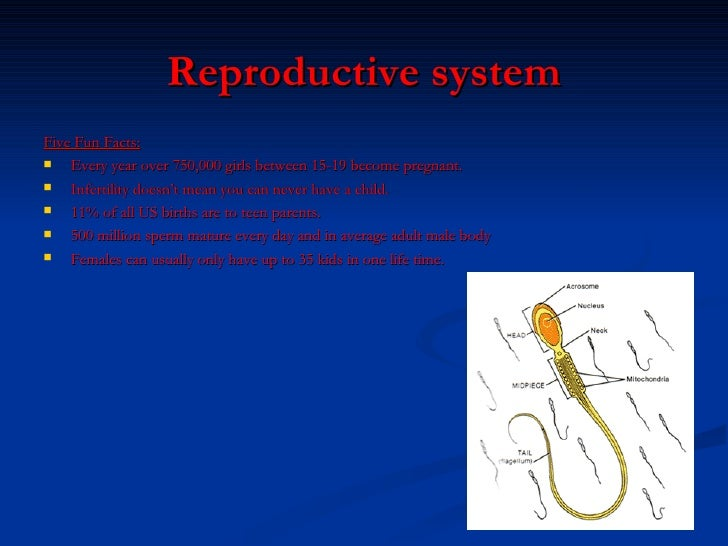 reproductive system facts – citybeauty,