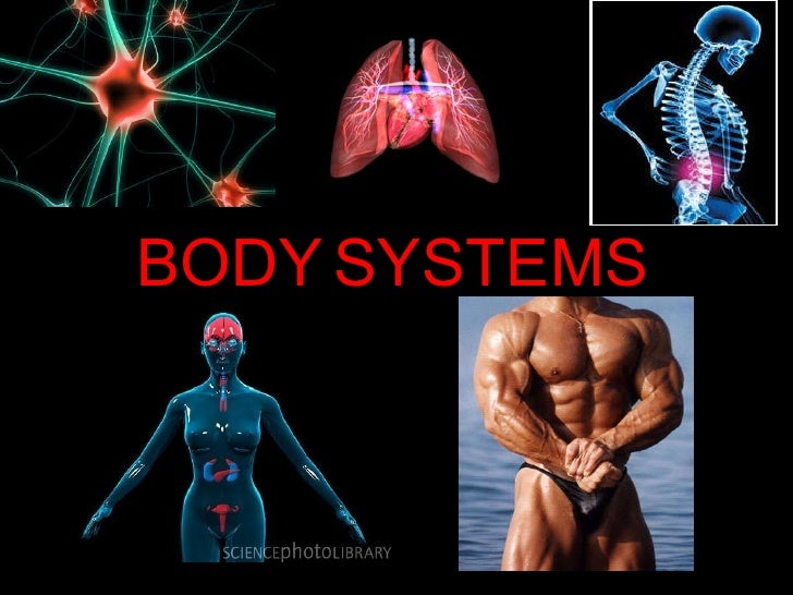 BODY SYSTEMS  BODY   SYSTEMS
