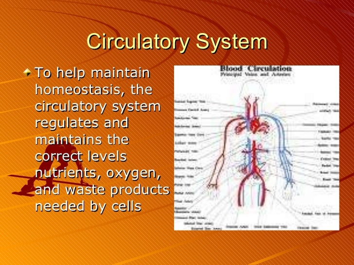 How two body systems interrelate to perform named functions essay