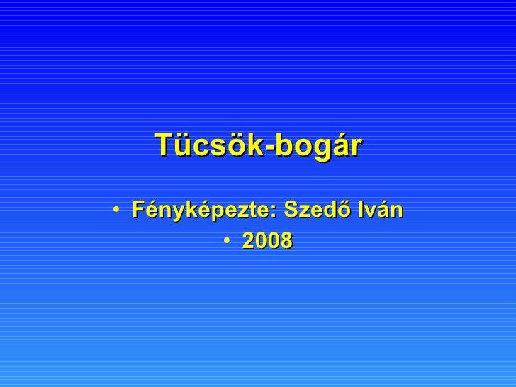 Tücsök-bogár <ul><li>Fényképezte: Szedő Iván </li></ul><ul><li>2008 </li></ul>