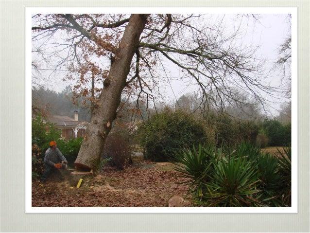 le parcours du bois de l 39 arbre l 39 objet. Black Bedroom Furniture Sets. Home Design Ideas