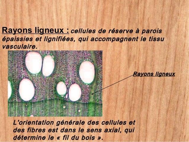 caractéristiques du bois 1 caractéristiques du bois le bois