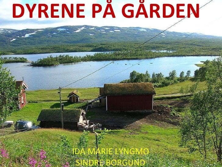 DYRENE   PÅ   GÅRDEN IDA MARIE LYNGMO SINDRE BORGUND