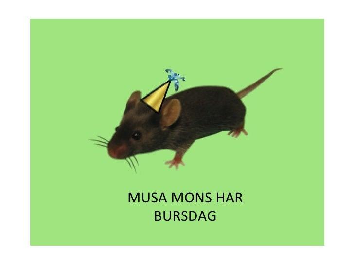 MUSA MONS HAR BURSDAG