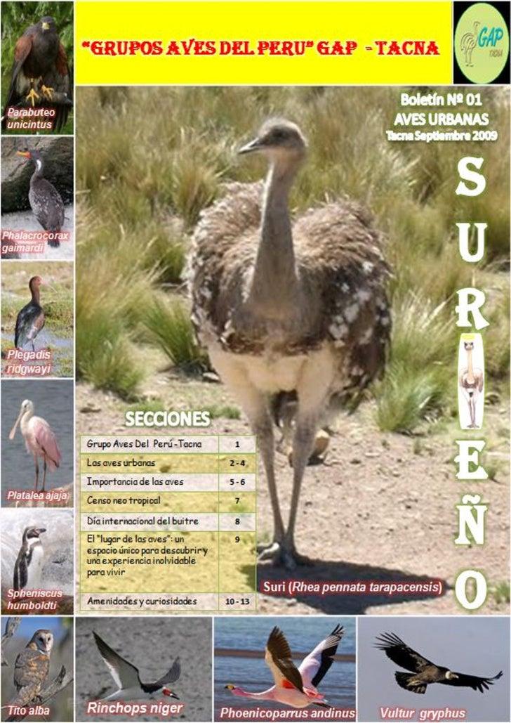 GRUPO AVES DEL PERU                   REGION TACNA         2009        Grupo de Aves del Perú – Region Tacna    La diversi...