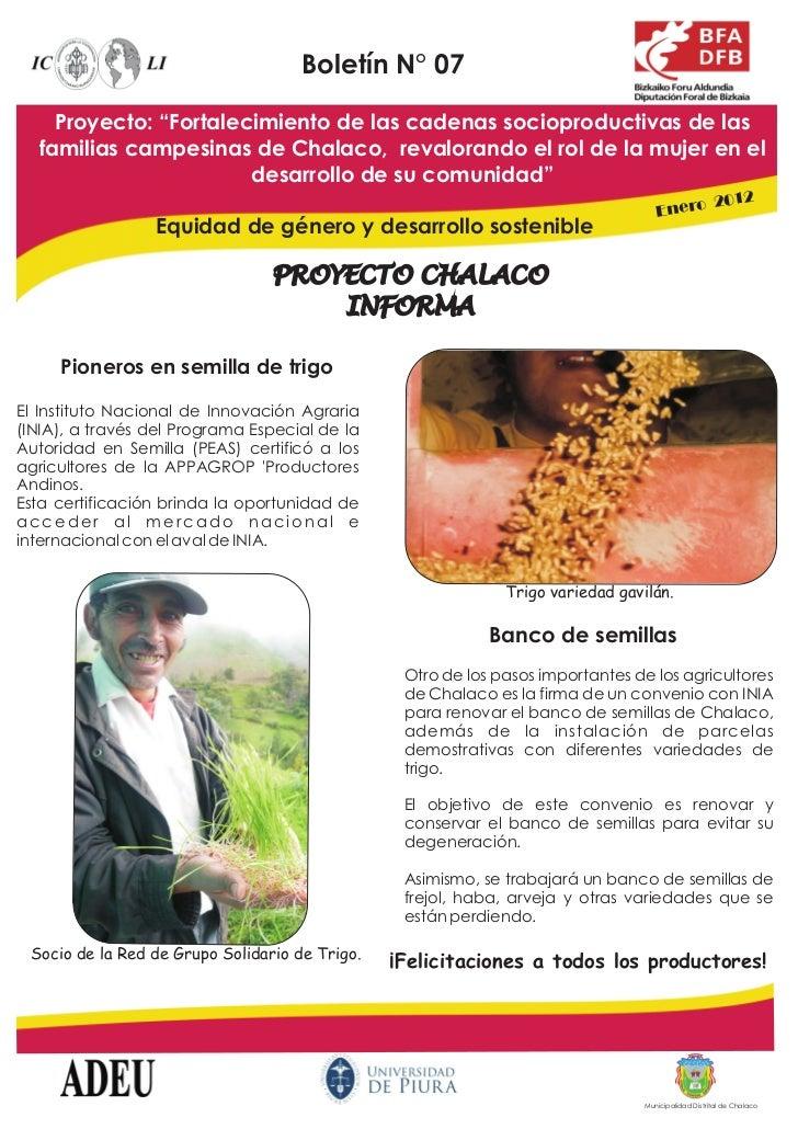 """Boletín N° 07    Proyecto: """"Fortalecimiento de las cadenas socioproductivas de las  familias campesinas de Chalaco, revalo..."""