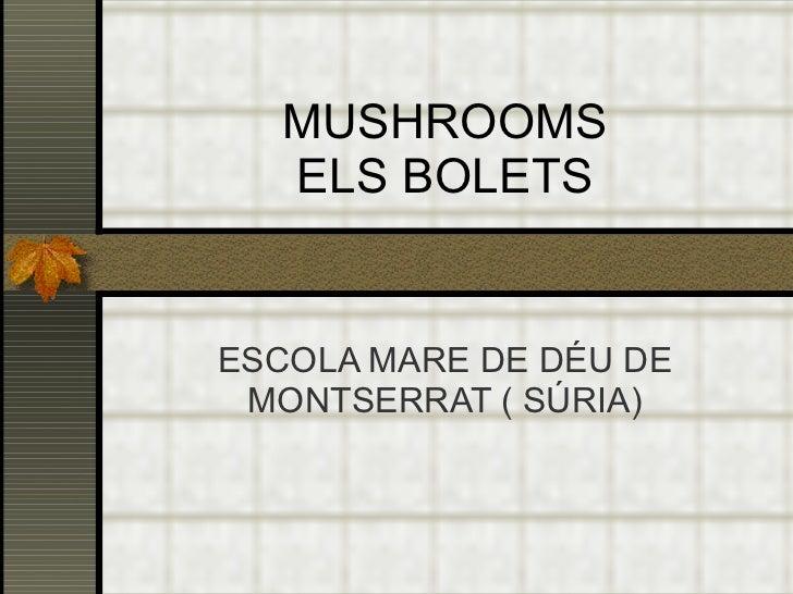 MUSHROOMS ELS BOLETS ESCOLA MARE DE DÉU DE MONTSERRAT ( SÚRIA)