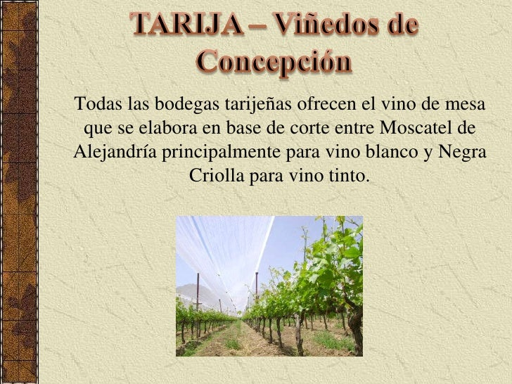 TARIJA – Viñedos de Concepción<br />Todas las bodegas tarijeñas ofrecen el vino de mesa que se elabora en base de corte en...