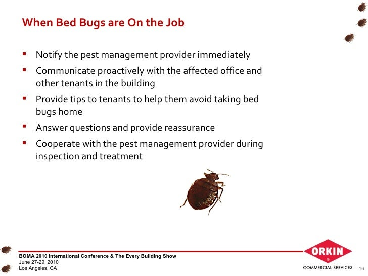 Bed Bugs In Office Chair