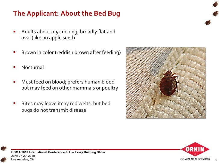 Bed Bug Treatment Cost Charlotte Nc