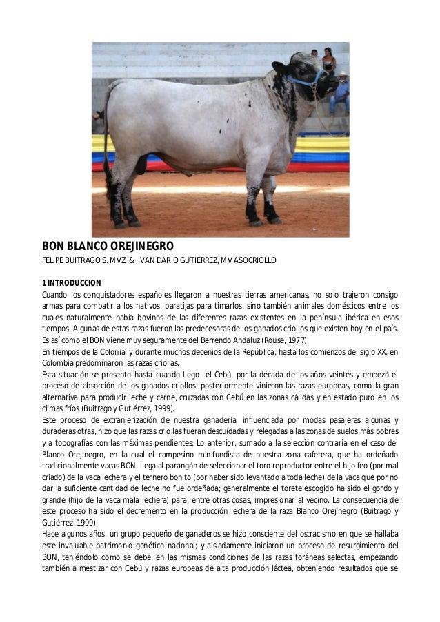 BON BLANCO OREJINEGRO  FELIPE BUITRAGO S. MVZ & IVAN DARIO GUTIERREZ, MV ASOCRIOLLO  1 INTRODUCCION  Cuando los conquistad...