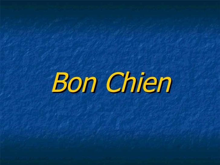 Bon Chien