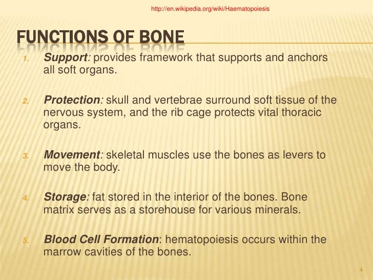 Functions of Bone<br ...