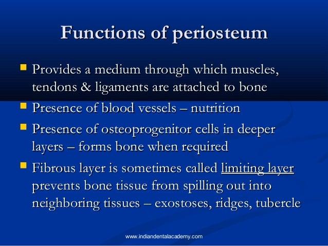 Bone Dental Implant Courses