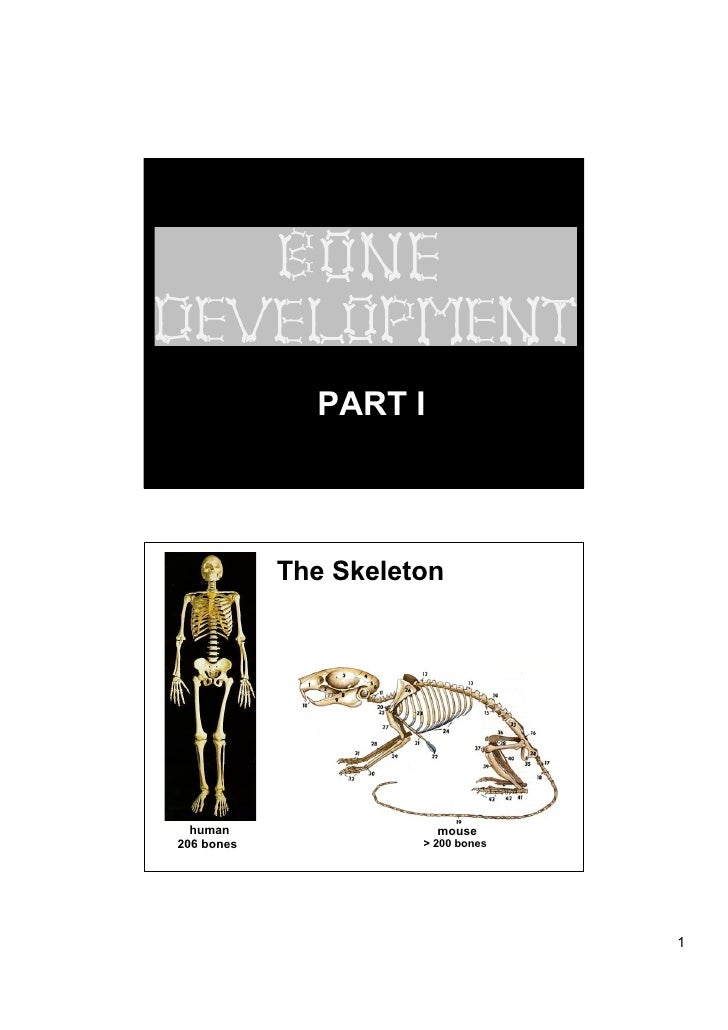 PART I                The Skeleton       human                 mouse 206 bones             > 200 bones                    ...