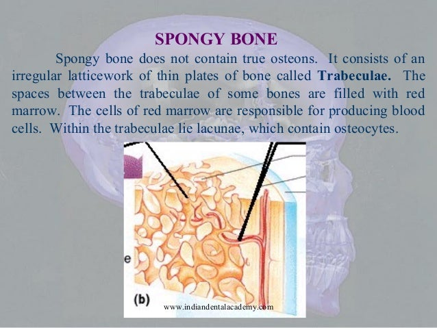 Bone development and morphology / dental crown & bridge courses