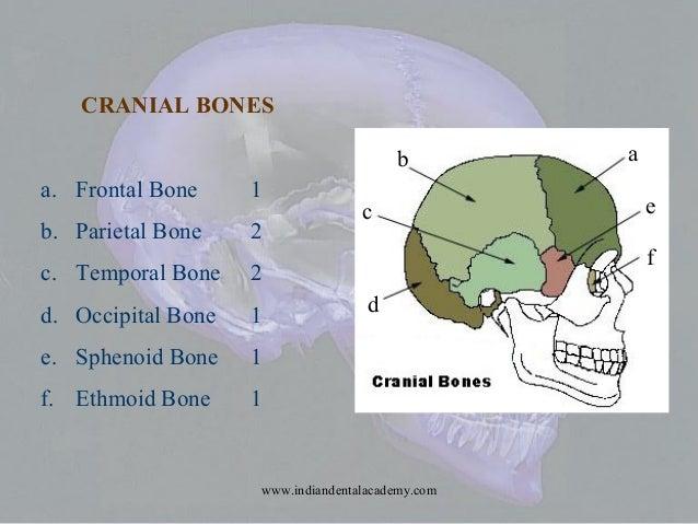 sphenoid bone development – localprivate, Human Body