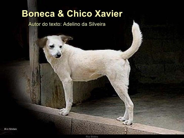 Autor do texto: Adelino da Silveira  Boneca & Chico Xavier