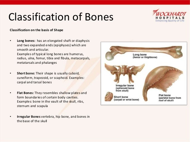 Bone Care 24173384 as well Anatomical Body Regions And Organs also 5018 as well 1619289list additionally 14911016. on two body cavities