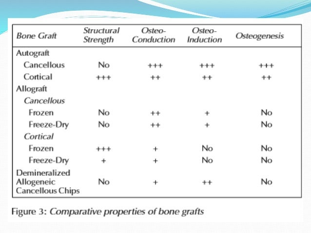 What Is Responsible For The Formation Building Of New Bone