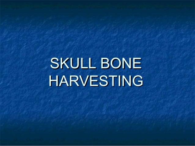 SKULL BONESKULL BONE HARVESTINGHARVESTING