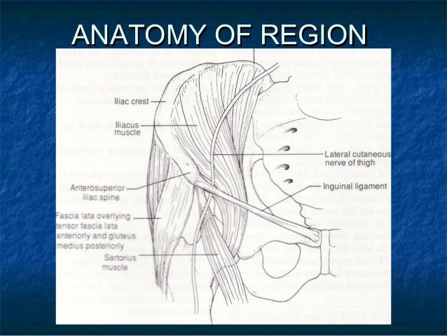 ANATOMY OF REGIONANATOMY OF REGION