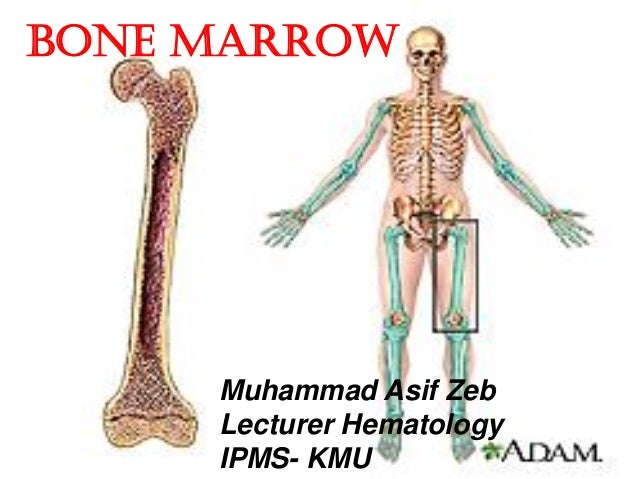 bone-marrow-1-638.jpg?cb=1434743151