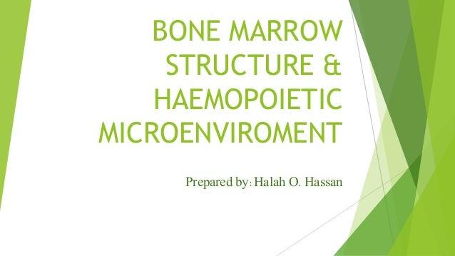 BONE MARROW STRUCTURE & HAEMOPOIETIC MICROENVIROMENT Prepared by:Halah O. Hassan