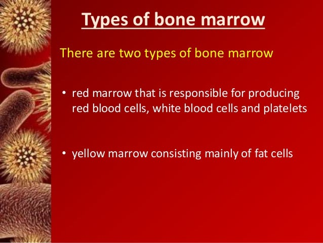 tissue transplant bone marrow essay Bone marrow and peripheral stem cell donation is very essential to many people's lives there are many diseases that can require the need for a bone marrow transplant bone marrow is a spongy tissue found inside bones.