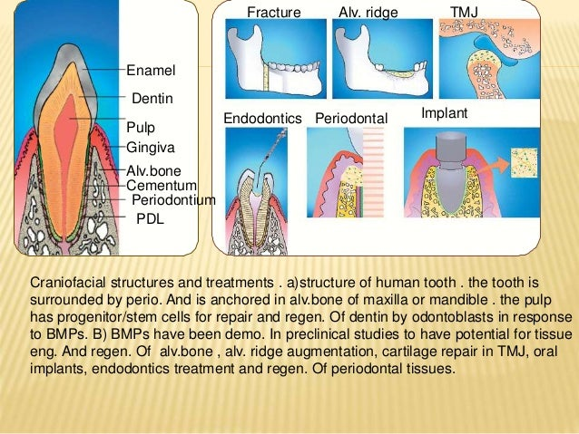 Bone Morphogentic Protein