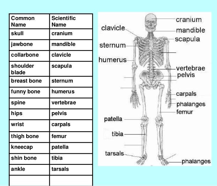 bone slide