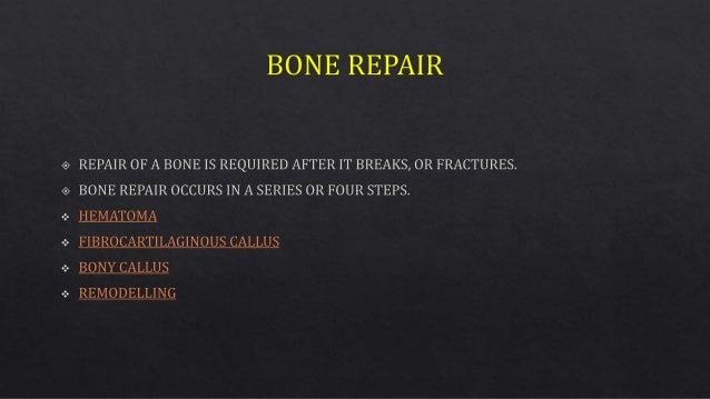Bone repair Slide 2